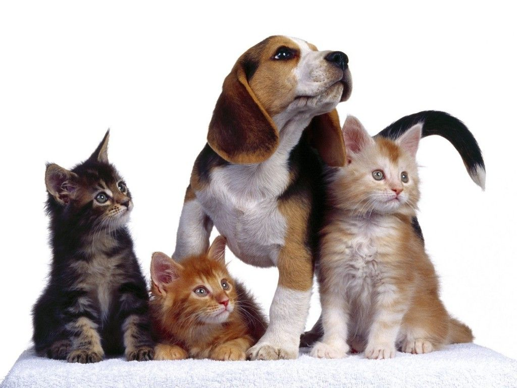 All pets Veterinaria perros y gatos Quito