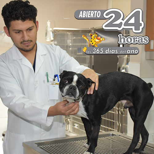 Allpets-Veterinario-24-horas-atencion-Quito