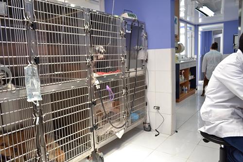 hospitalizacion-2-allpets-clinica-veterinaria-hospital-quito